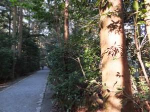 大津神社ほかへの参道(外宮)