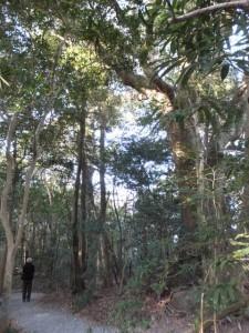 上御井神社を遥拝したフェンス付近・・・