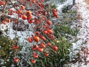 雪の五十鈴川左岸にて