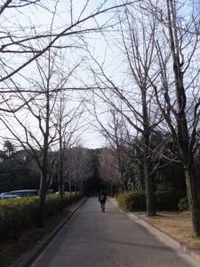 第一駐車場脇の歩道(熱田神宮)