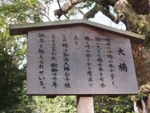 (21)大楠の説明板(熱田神宮)