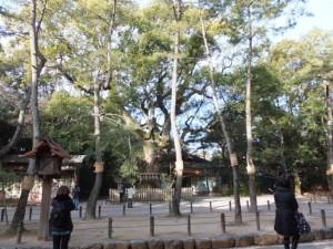 正参道から望む(21)大楠の説明板(熱田神宮)