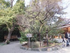 (12)ならずの梅(熱田神宮)