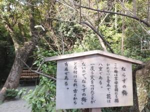 (12)ならずの梅の説明板(熱田神宮)