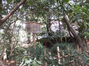 西参道から望む(26)又兵衛・茶席(熱田神宮)
