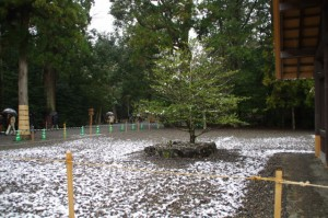 大庭、四至神(昨夜の雪が残る外宮)