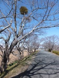 宮川堤(右岸)