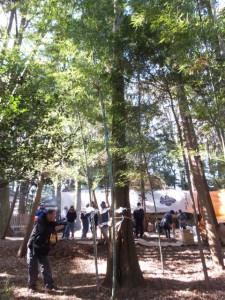 杉の幹から生える竹(城田神社)