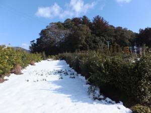 大雪の後の久具都比賣神社