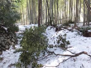 大雪の後の多岐原神社から三瀬の渡しへ