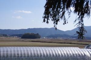 真念寺付近から望む朽羅神社の社叢(御船神社〜朽羅神社)