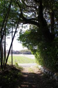 田乃家神社付近