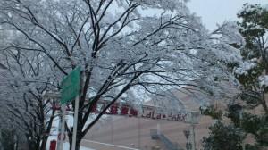 伊勢での大雪、イオンタウン伊勢ララパーク(徒歩での出勤時)