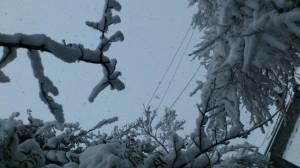 伊勢での大雪、箕曲神社参道(徒歩での出勤時)