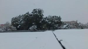 伊勢での大雪、箕曲神社参道から望む社叢(徒歩での早めの退勤時)