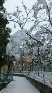 伊勢での大雪、箕曲神社参道(徒歩での早めの退勤時)
