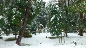 伊勢での大雪、箕曲神社参道から望む境内(徒歩での早めの退勤時)