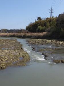 堀割橋上流側にある岩の川床(五十鈴川)