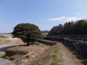 大土御祖神社の対岸(五十鈴川の左岸)
