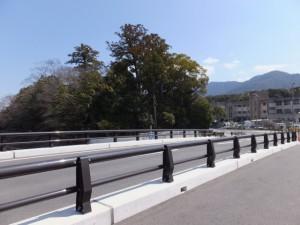 五十鈴橋(五十鈴川)から望む大土御祖神社の社叢