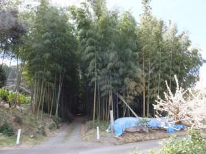 鴨神社の参道入り口の竹やぶ