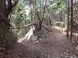鴨神社の参道、分岐点