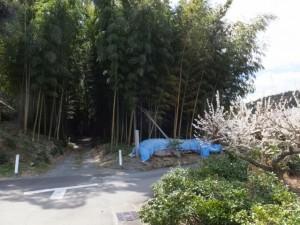 鴨神社の参道入り口にある竹やぶ