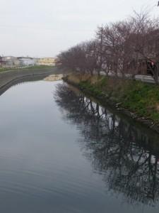 小木橋(桧尻川)から望む「神習桜」の桜並木