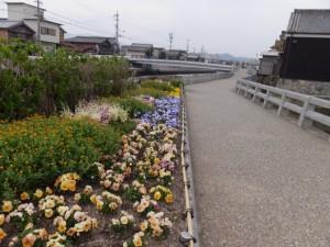 川の駅 河崎(勢田川)付近の花壇
