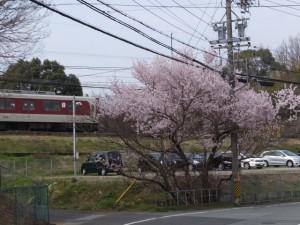 皇學館会館付近の桜(近鉄五十鈴川駅から大五輪の五輪塔へ)