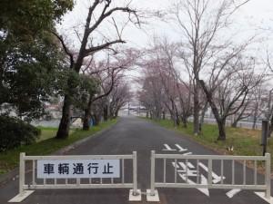 倭姫宮参道(神宮徴古館の駐車場側)