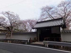 オヤネザクラと修復を終えた国史跡 旧豊宮崎文庫の門と練塀