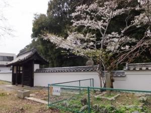 修復された門と練塀、オヤネザクラ(旧豊宮崎文庫)