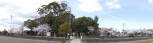 箕曲神社とイオンタウン伊勢ララパークの桜(伊勢市小木町)