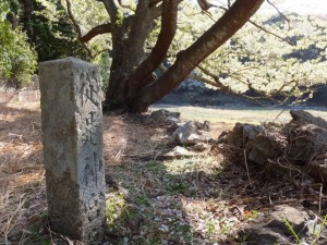 「家建の茶屋跡」のオオシマザクラ脇に立つ「從是神宮宮(域)」の石柱