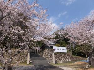 磯部神社の桜(志摩市磯部町)