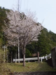 犁谷から見上げる犁谷橋の北詰付近(大台町)