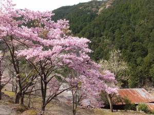 桑木谷(大台町大杉)