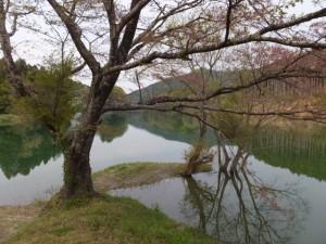 さくらの里公園(大台町)