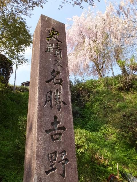 「史蹟及名勝 吉野山」の石柱としだれ桜
