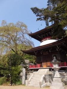 しだれ桜と多宝塔(東南院)