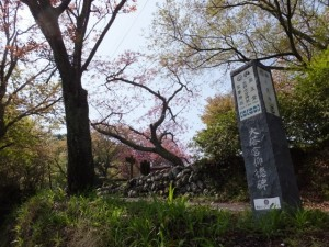 桜展示園付近