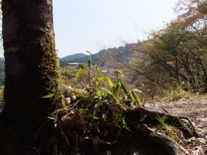 桜展示園付近〜御幸の芝