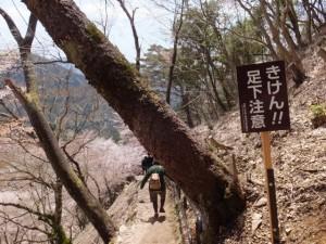 吉野 奥千本 (「左 西行庵、右 風閣寺」の道標から西行庵へ)