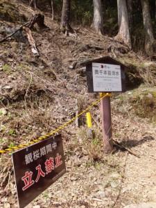 観桜期間中 立入禁止の警告板と奥千本苔清水の説明板