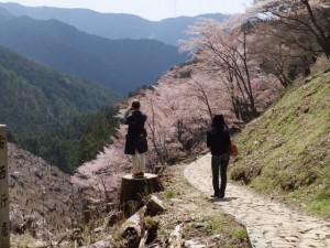 苔清水付近から望む吉野 奥千本