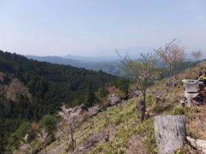 金峯神社〜修行門(金峯神社の鳥居)の途中