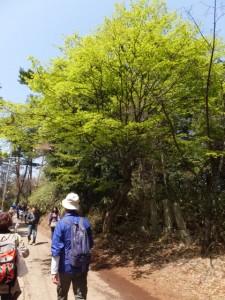 修行門(金峯神社の鳥居)〜吉野水分神社