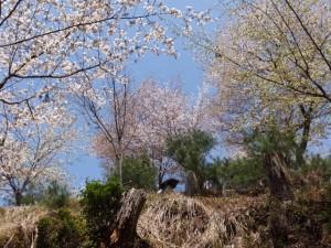高城山展望台への登り道(修行門(金峯神社の鳥居)〜吉野水分神社)