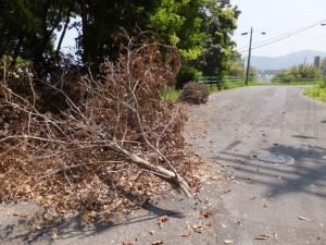 折れて落下した木の枝(旧二見隧道付近)